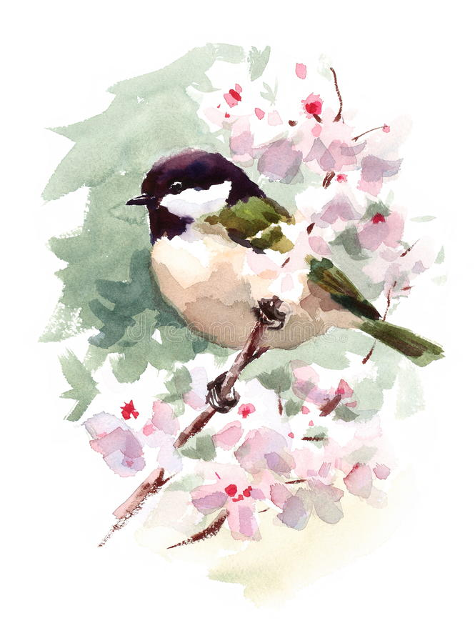 Watercolor Bird Tit Chickadee On Cherry Blossoms Branch Hand Painted Summer Spring Illustration. Watercolor illustration of Bird Tit Chickadee On Cherry Blossoms vector illustration