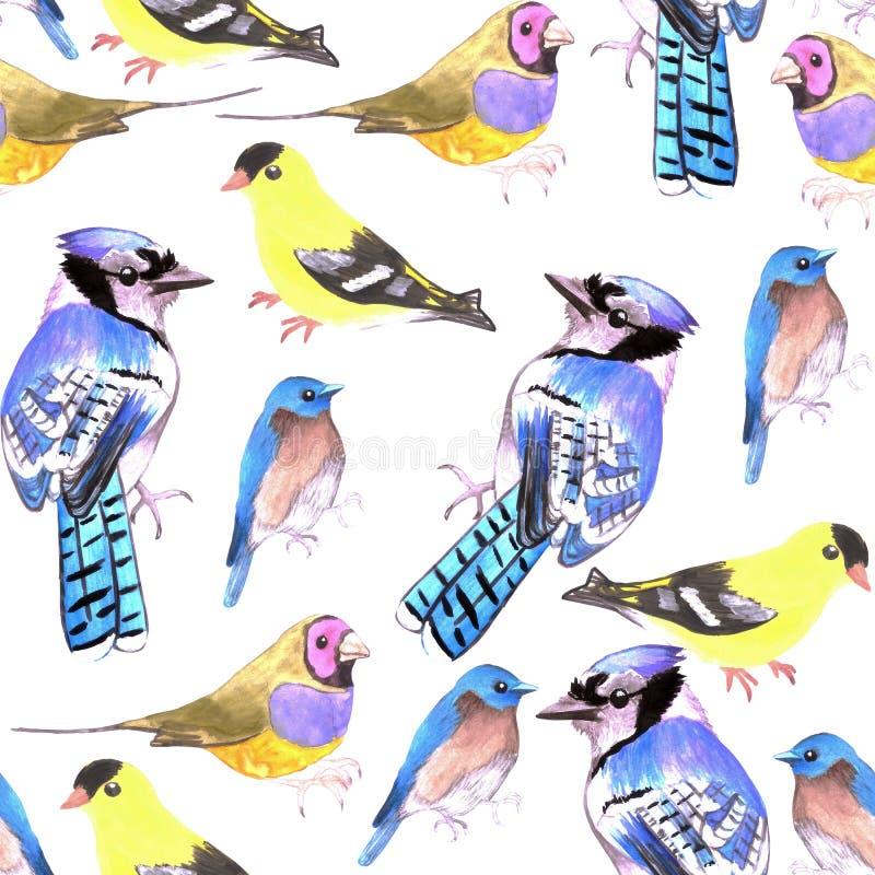 Watercolor birds in tetrad color scheme seamless watercolor background-purple yellow, orange, blue. Watercolor birds in tetrad color scheme seamless watercolor royalty free illustration