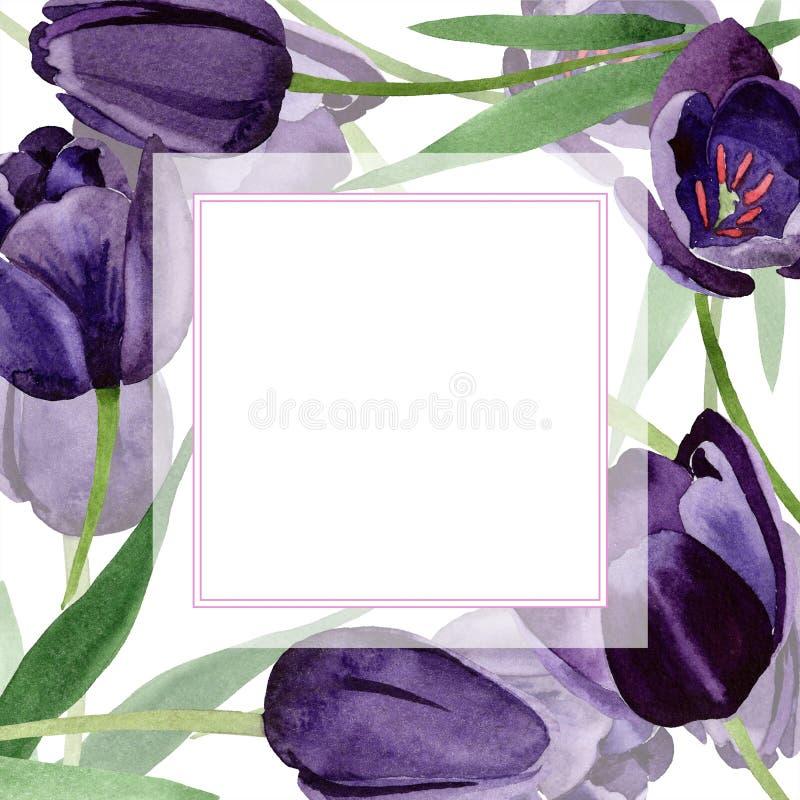 Watercolor black tulips flower. Floral botanical flower. Frame border ornament square. stock illustration