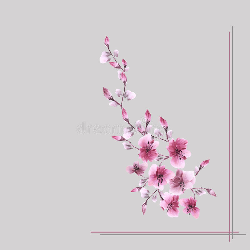 Watercolor blossoming spring branch with pink flowers on the gray background stock images
