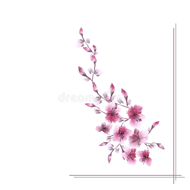 Watercolor blossoming spring branch with pink flowers on a white background -1 stock image