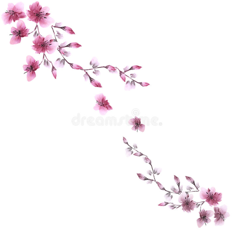 Watercolor blossoming spring branch with pink flowers on a white background. Isolated royalty free stock image