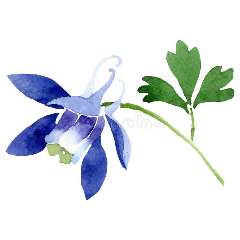 Watercolor blue aquilegia flower. Floral botanical flower. Isolated illustration element. Aquarelle wildflower for background, texture, wrapper pattern, frame stock illustration