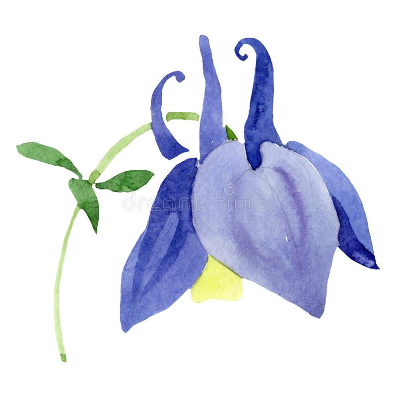 Watercolor blue aquilegia flower. Floral botanical flower. Isolated illustration element. Aquarelle wildflower for background, texture, wrapper pattern, frame royalty free illustration