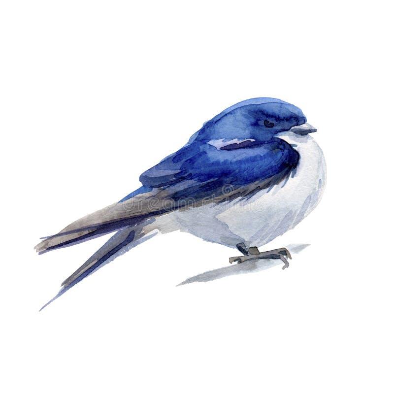 Watercolor blue bird. Swarlow stock illustration