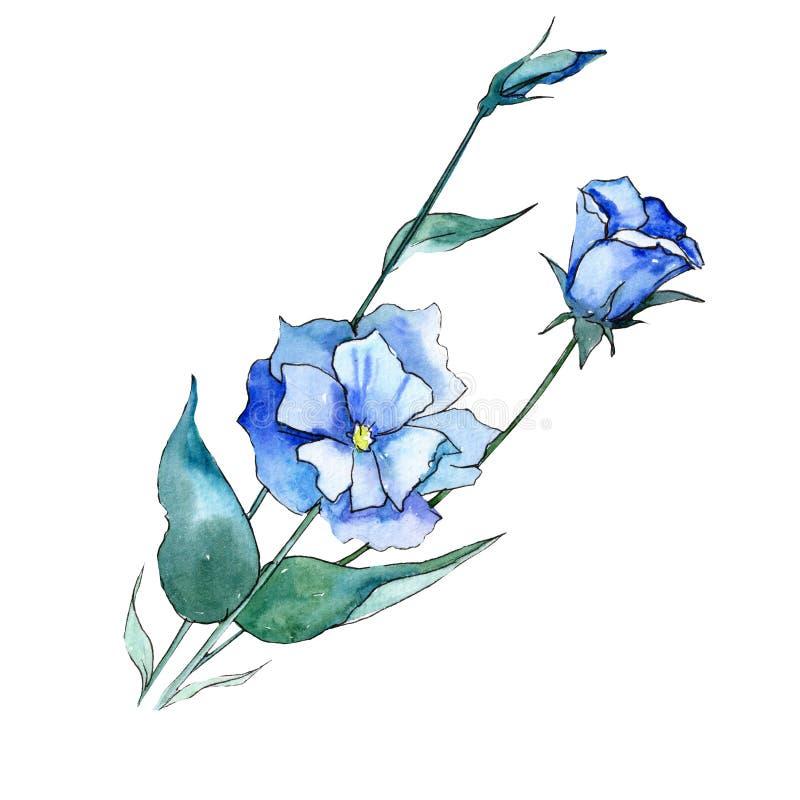 Watercolor blue eustoma flower. Floral botanical flower. Isolated illustration element. Aquarelle wildflower for background, texture, wrapper pattern, frame or vector illustration
