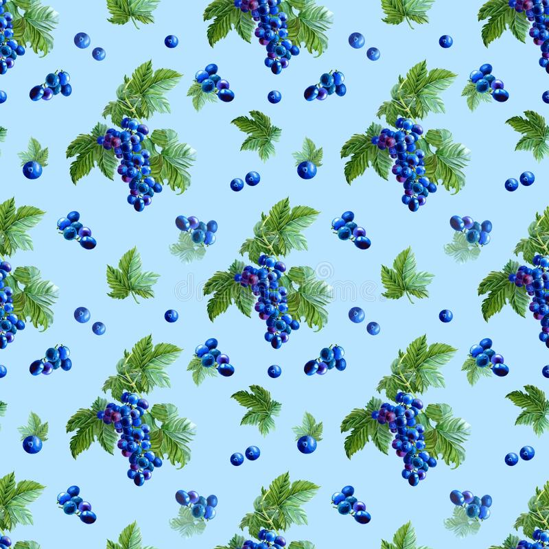 Watercolor blue grape,green leaves on white background.Seamless pattern royalty free illustration