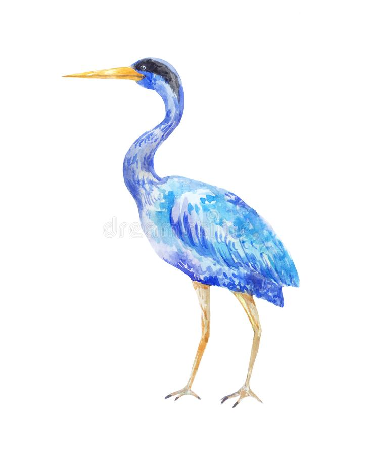 Free Watercolor Blue Heron. Illustration Of A Standing Bird Royalty Free Stock Image - 106717366