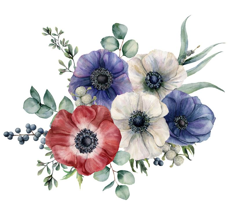 Watercolor blue, red and white anemone bouquet. Hand painted colorul flowers, brunia and privet berry, eucalyptus leaves. Isolated on white background royalty free illustration