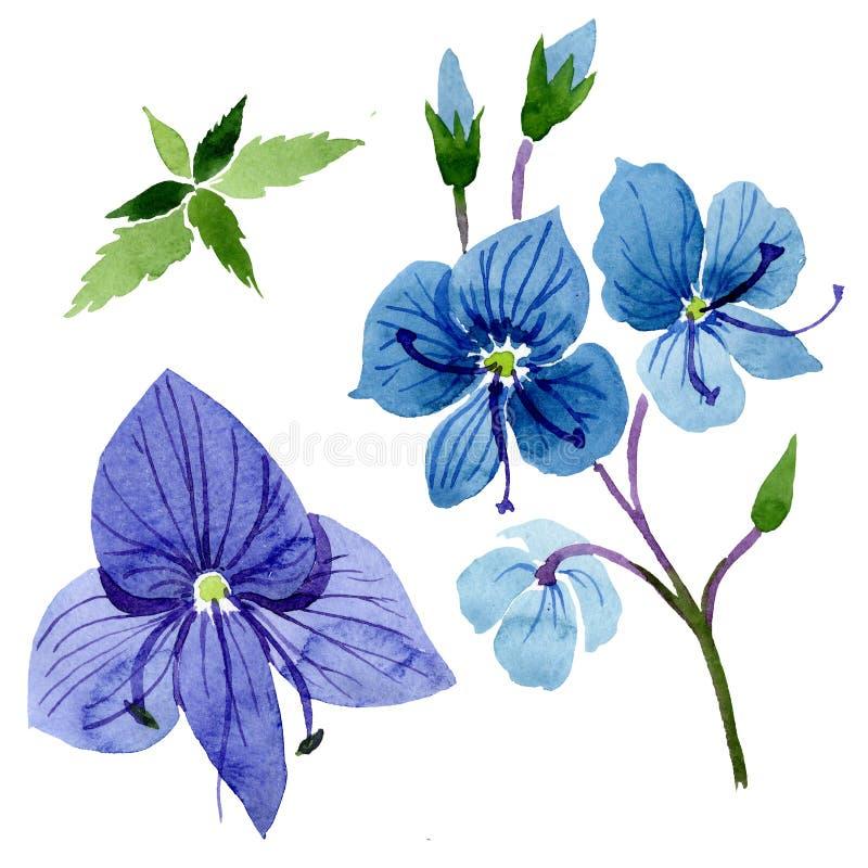 Watercolor blue Veronica flower. Floral botanical flower. Isolated illustration element. Aquarelle wildflower for background, texture, wrapper pattern, frame stock illustration