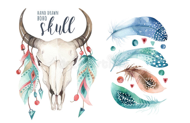 Watercolor bohemian cow skull and feather. Western mammals. Boho hipster deer boho decoration print antlers. flowers. Feathers. on white background. Hand drawn stock illustration