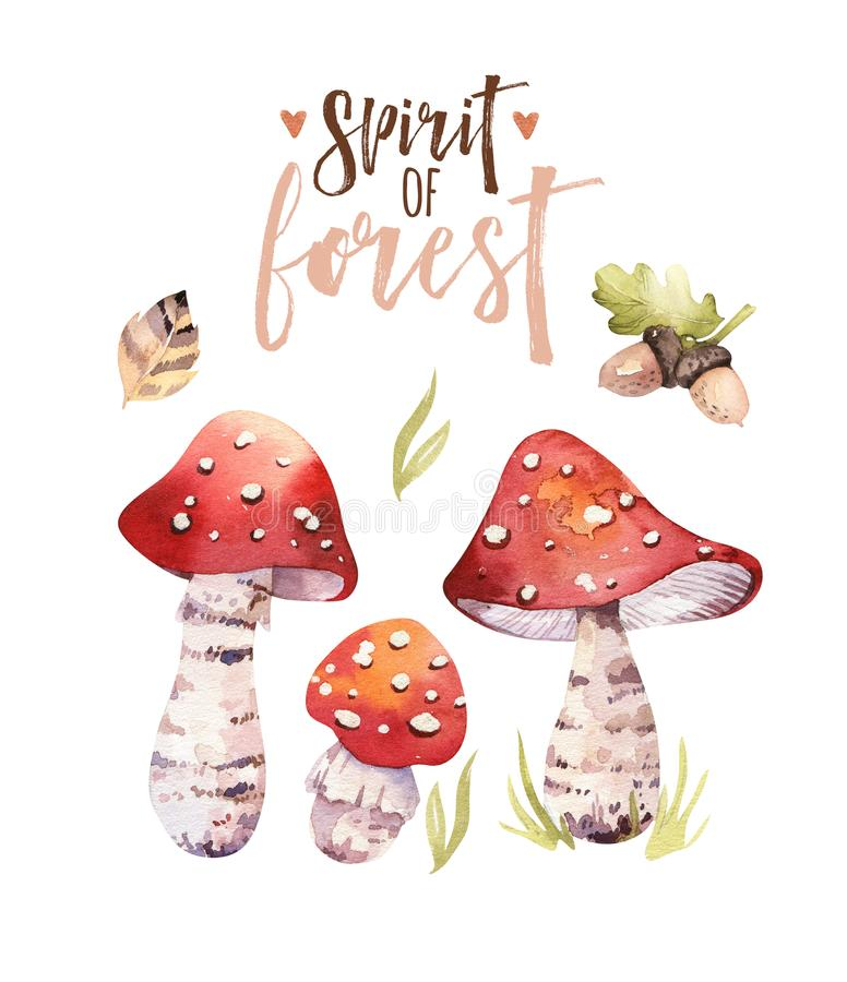Watercolor bohemian forest mushrooms poster, woodland isolated amanita illustration, fly agaric, boletus, orange-cap. Watercolor bohemian forest mushrooms set royalty free illustration