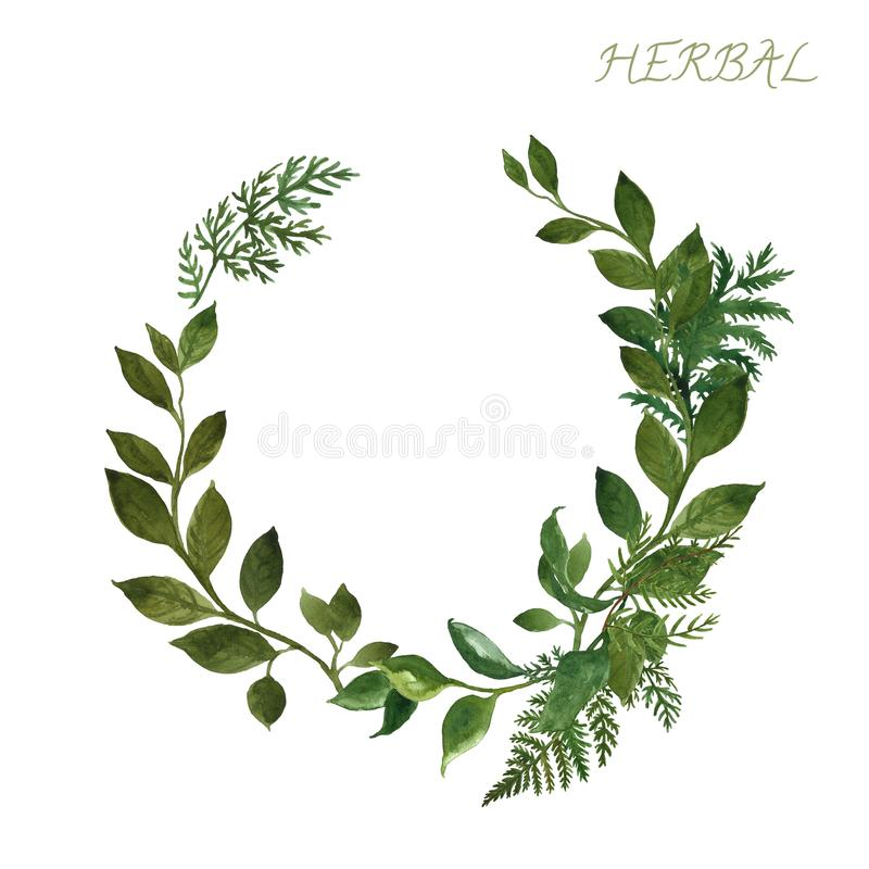 Watercolor botanical frame with wild herbs and green leaves on white background. Floral wedding invitation design template. Watercolor floral greenery wreath stock photo