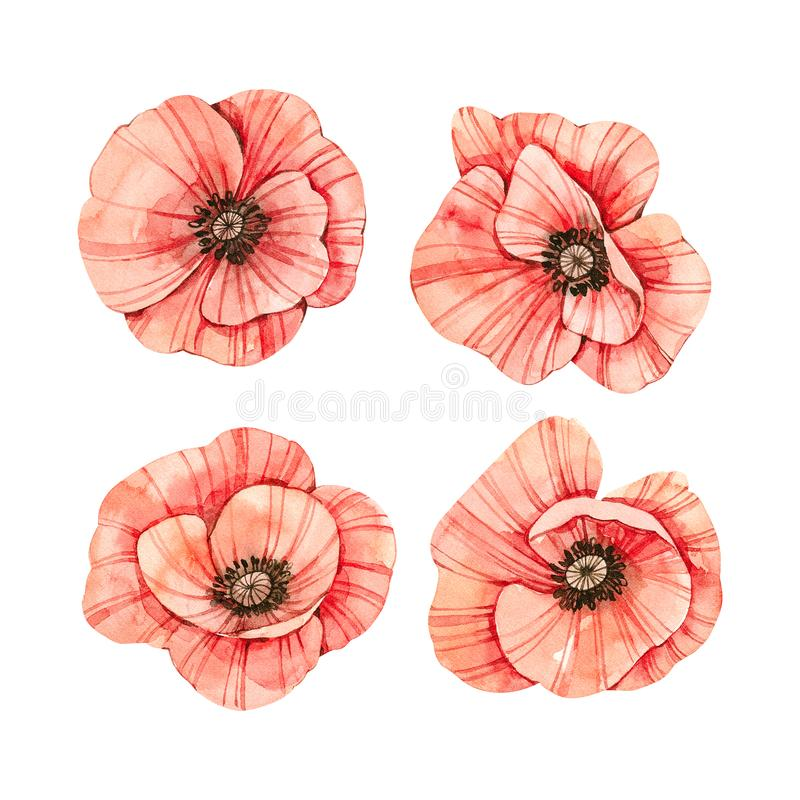 Watercolor botanical illustrations. Fresh red poppy blossom. Wild flowers collection. Perfect for wedding invitations, cards, stock illustration