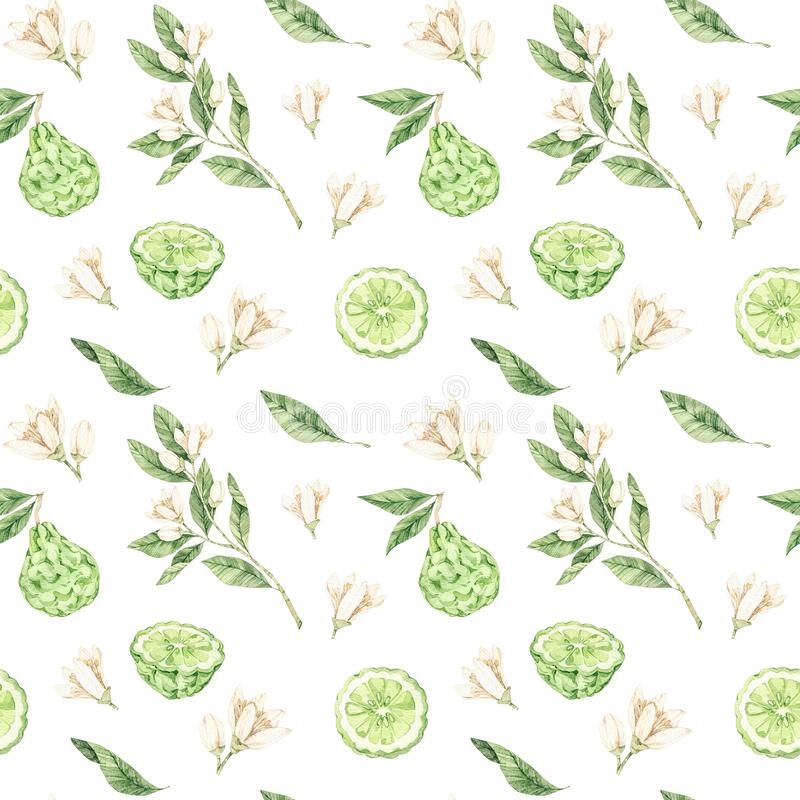 Watercolor botanical illustrations. Seamless pattern with bergamot blossom and fruit. Citrus bergamia flowers, fruit and leaves. Collection. Perfect for wedding royalty free stock photo