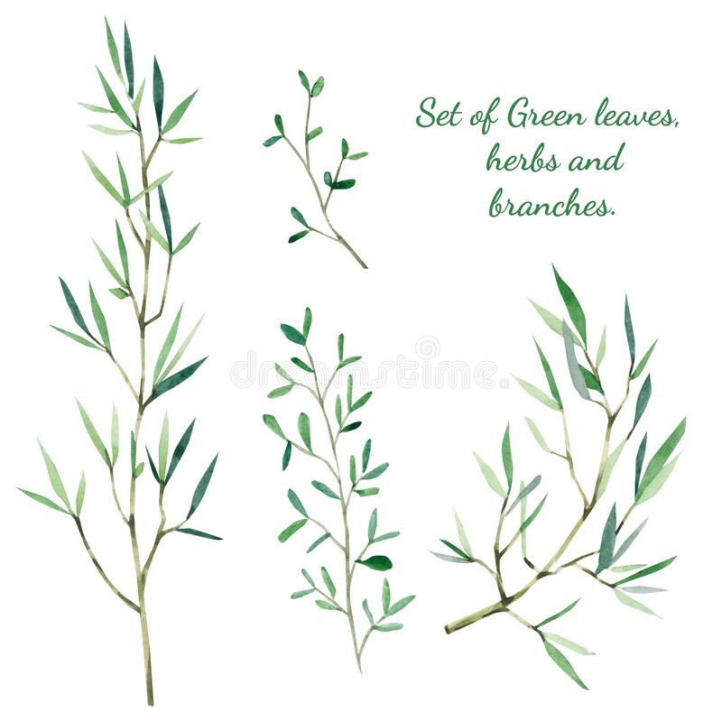 Watercolor botanical. Set of Green leaves, herbs and branches. Branches Design elements. Perfect for wedding invitations, blogs, posters and more royalty free illustration