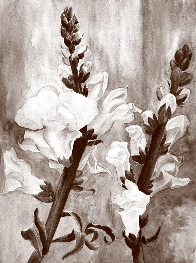 watercolor Botanische Zeichnung Eine Niederlassung mit Blumen und den Knospen, der Mund des Löwes Hintergrund, schön, Blatt vektor abbildung