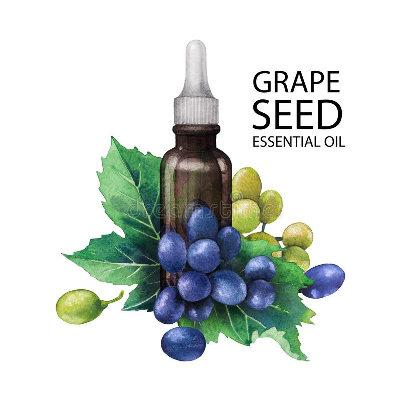 Watercolor bottle of essential oil made of grape seed vector illustration