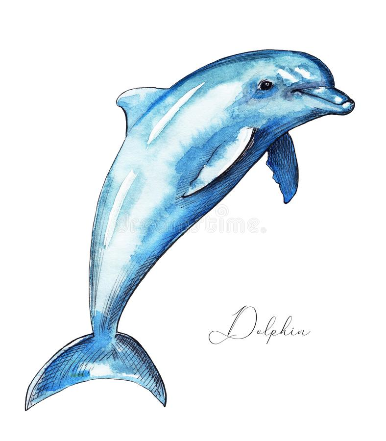 Watercolor bouncing dolphin stock illustration