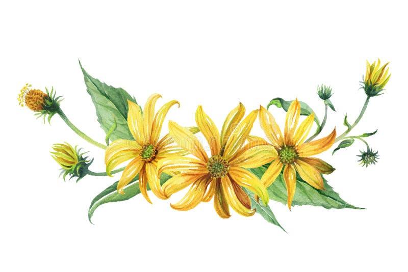 watercolor Bouquet des marguerites jaunes illustration stock