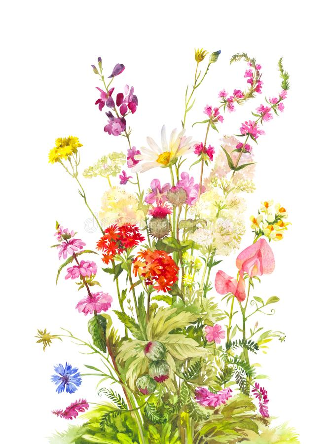 Bouquet of forest flowering plants. Wild field flowers. Watercolor illustration isolated royalty free stock image