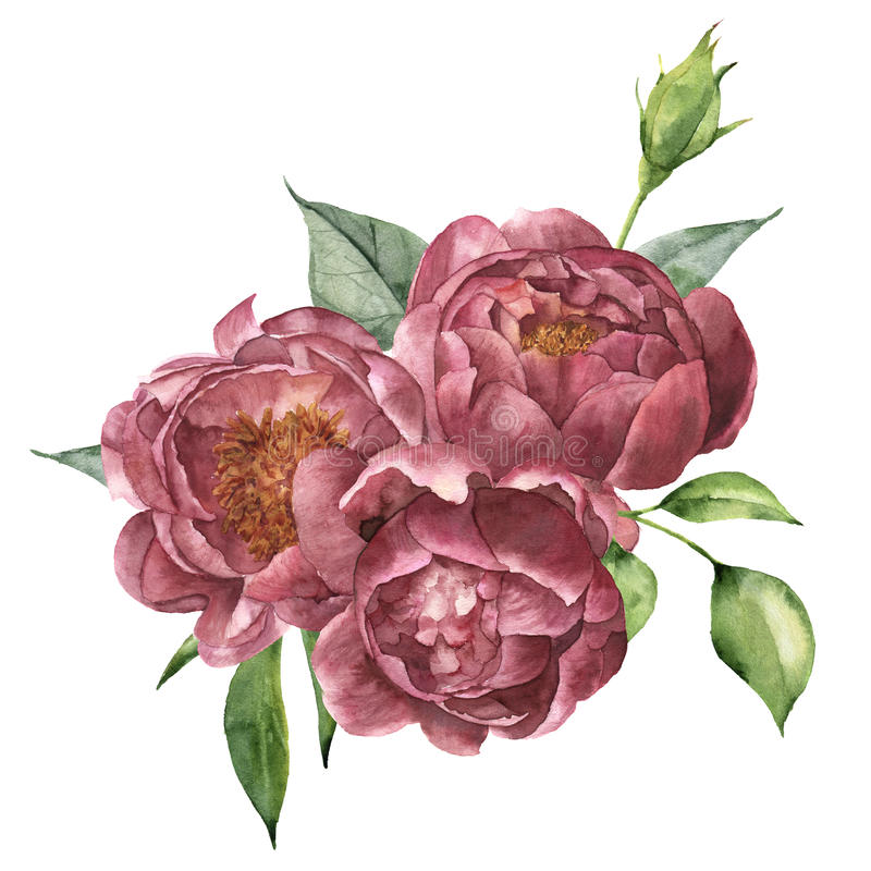 Watercolor bouquet of peony and greenery. Hand painted floral composition with flowers and leaves isolated on white vector illustration