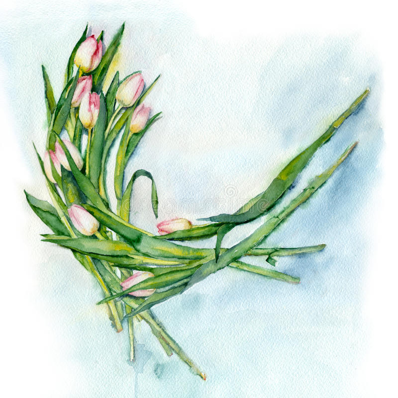 Download Watercolor Bouquet Of Tulips. Stock Illustration - Image: 83708728