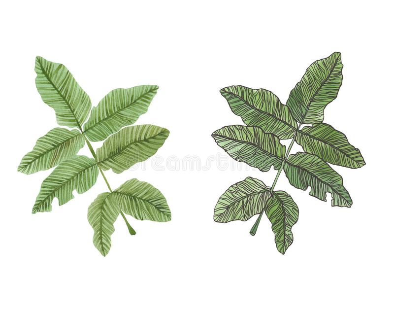 Watercolor branch of green leaves with streaky. Watercolor illustration of green leaves with streaky on white background royalty free illustration