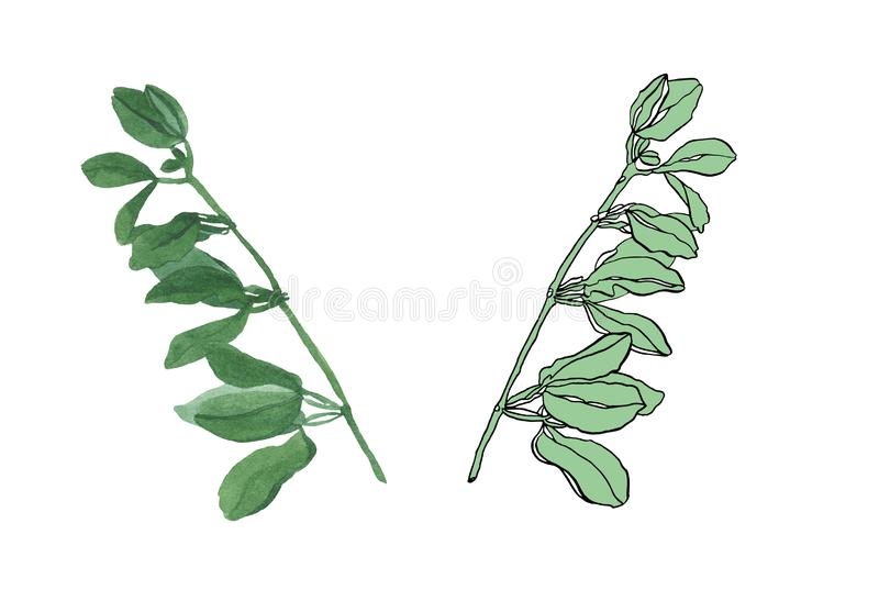 Watercolor branch of green leaves with streaky. Watercolor illustration green leaves with streaky on white background royalty free illustration
