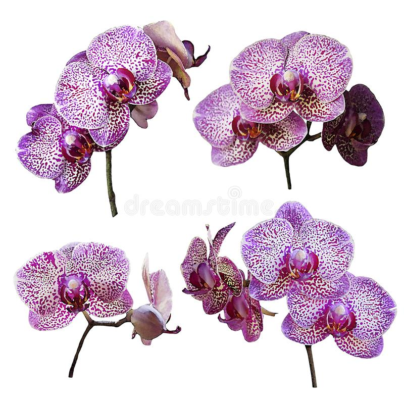 Watercolor branch of orchid flower isolated on white stock photos
