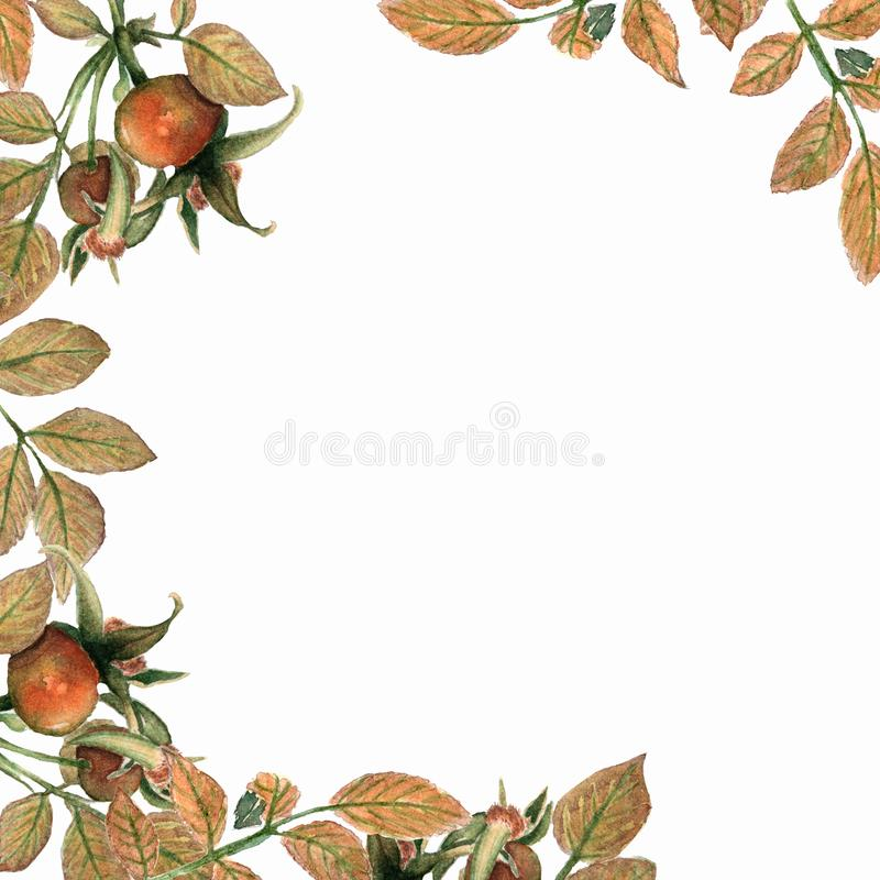 Watercolor brier card. Dog Rose branches and leaves frame on white background. royalty free illustration