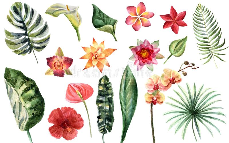 Watercolor bright summer illustration with tropical flowers stock illustration