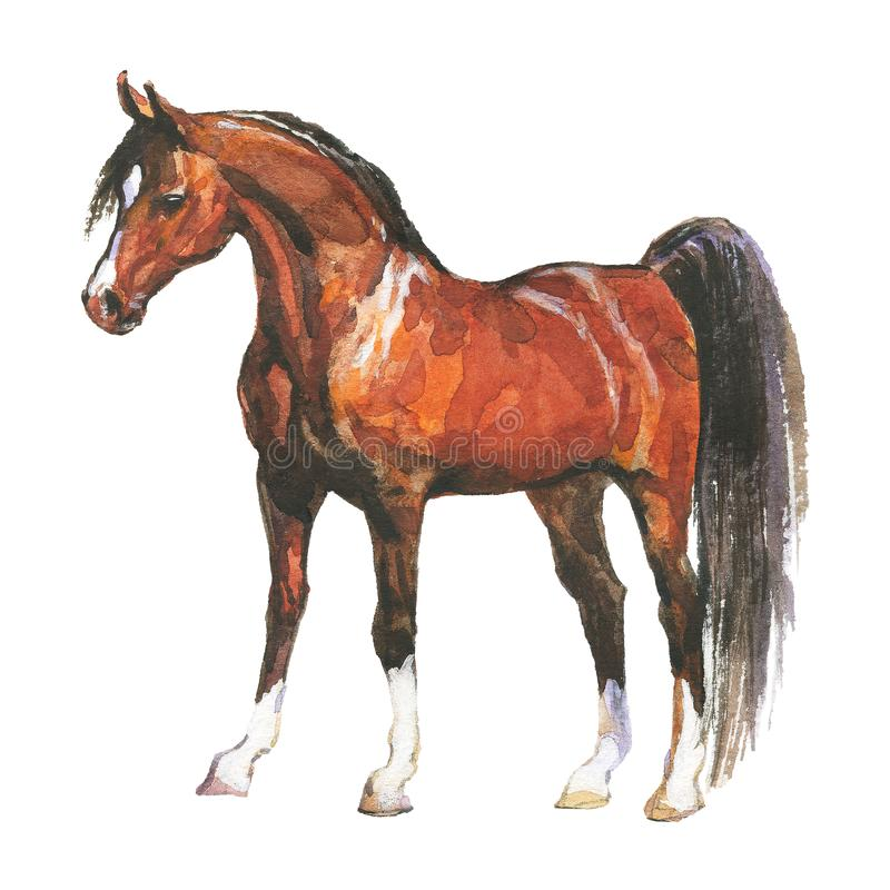 Watercolor brown horse stock illustration