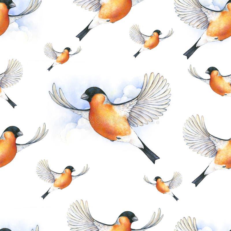 Watercolor bullfinch. Beautiful winter bird with grey and pinkish plumage soaring in clouds. Watercolor bullfinch. Bird in flight handwork drawing. Christmas royalty free illustration