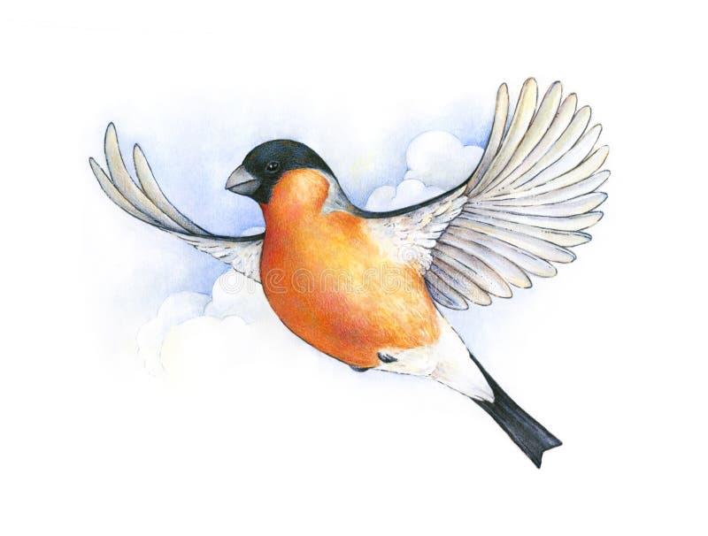 Watercolor bullfinch. bird in flight handwork drawing. Christmas symbol. Beautiful winter bird with grey and pinkish plumage soaring in clouds stock illustration