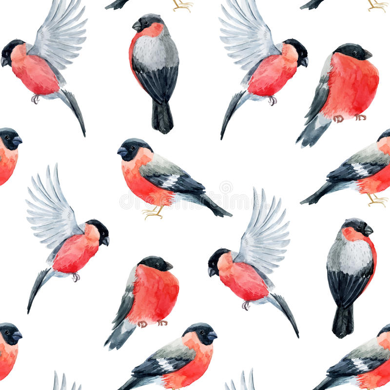 Watercolor bullfinch bird pattern. Beautiful pattern with nice watercolor bullfinch birds royalty free illustration