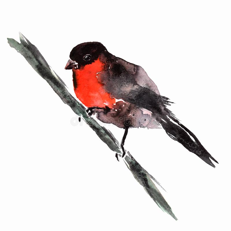 Watercolor bullfinch sitting on tree branch. Hand painted winter illustration with bird isolated on white background. Holiday prin vector illustration