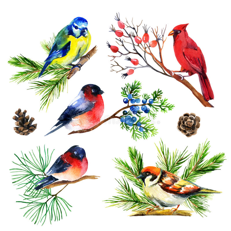 Watercolor bullfinch, titmouse, cardinal and sparrow on branches. Hand painted illustration royalty free illustration