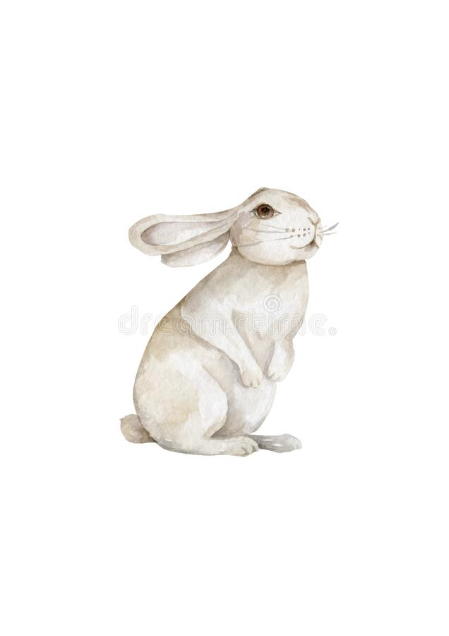 Free Watercolor Bunny. Rabbit. Easter Bunny. Cute Animal. Wildlife On White Background Stock Images - 192217554