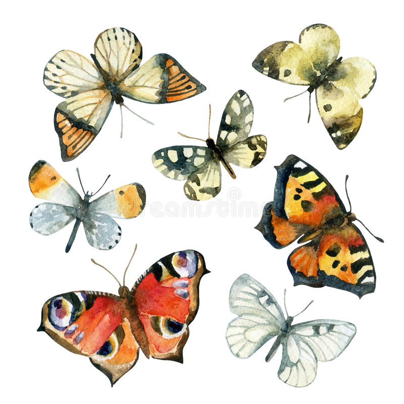 Watercolor butterfly set. Hand painted butterflies on white background