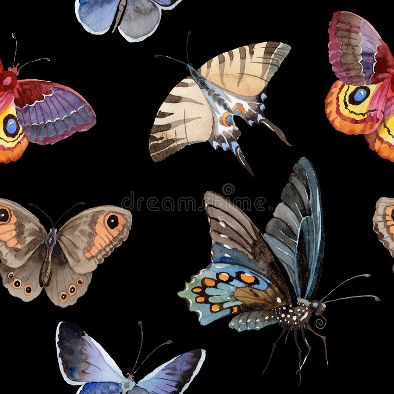 Watercolor butterfly tender insect, intresting moth, isolated wing illustration royalty free illustration