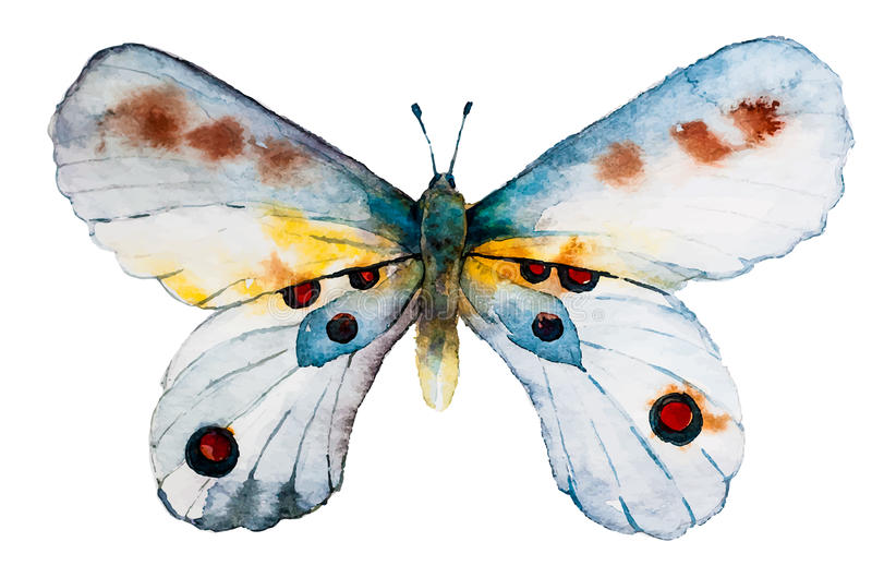 Watercolor butterfly stock illustration