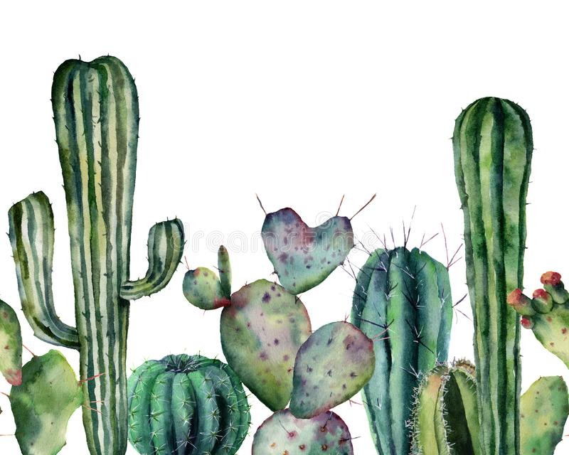 Watercolor cactus pattern. Hand drawn seamless ornament with desert plants isolated on white background. Flowering cacti. Card for design, print. Nature royalty free illustration