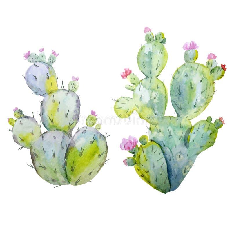 Watercolor cactus vector set vector illustration