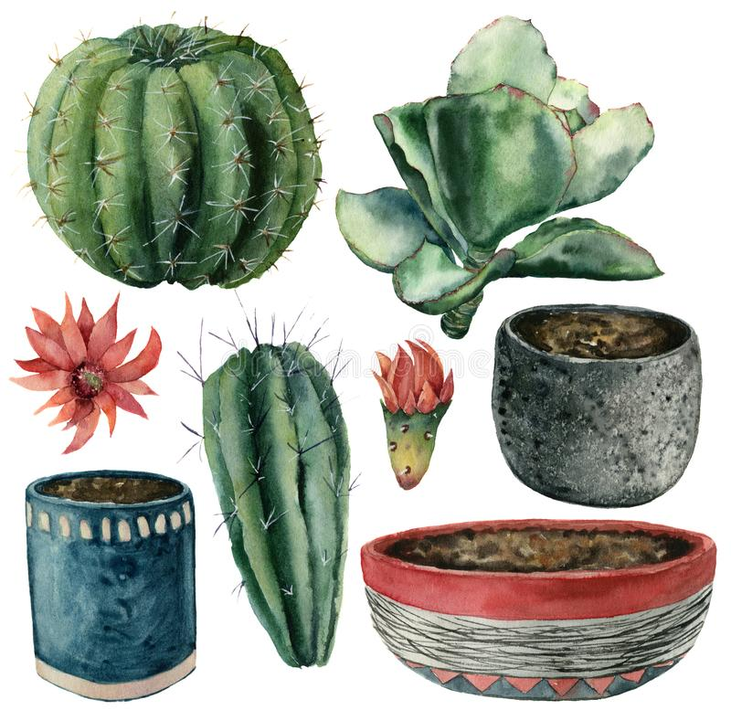 Watercolor cactuses, flowers, pot set. Hand painted cereus, echeveria and echinocactus grusonii with red and yellow stock illustration