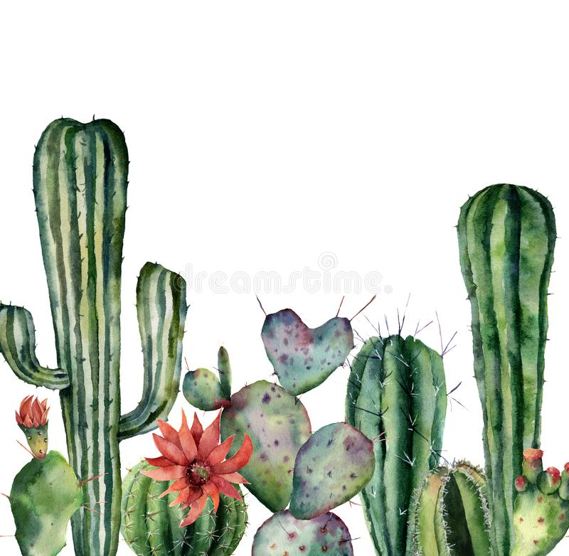Watercolor card with cactus. Hand painted print with desert plants isolated on white background. Flowering cacti card. For design, print. Nature botanical royalty free illustration
