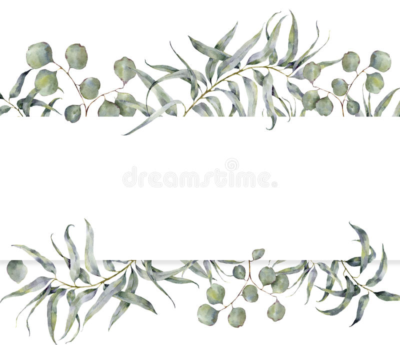 Watercolor card with eucalyptus branch. Hand painted floral frame with round leaves of silver dollar eucalyptus isolated stock illustration