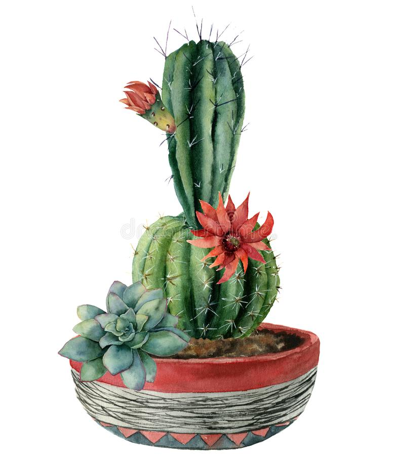 Watercolor card with green cactus and flowers in a pot. Hand painted cereus with red flower and green succulent isolated. On white background. Illustration for vector illustration