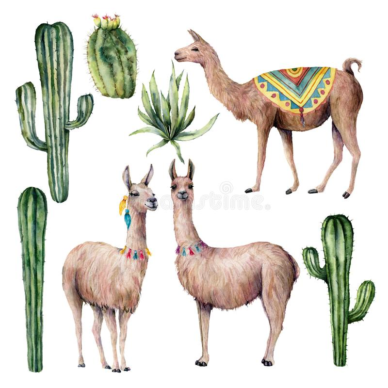 Watercolor card with llama and desert cacti. Hand painted traition botanical illustration with animal and floral on vector illustration
