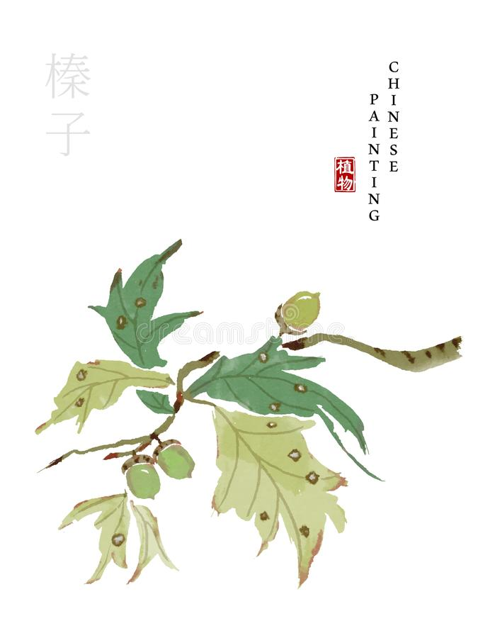 Watercolor Chinese ink paint art illustration nature plant from The Book of Songs Hazelnut. Translation for the Chinese word : vector illustration